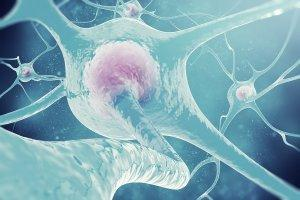 Nutrients and the nervous system